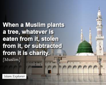 When a Muslim plants a tree
